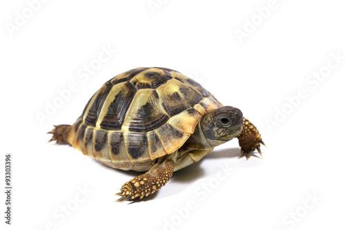 Deurstickers Schildpad Tortoise