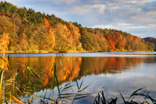 Obraz Złota polska jesień, lesisty brzeg jeziora Dębno - fototapety do salonu