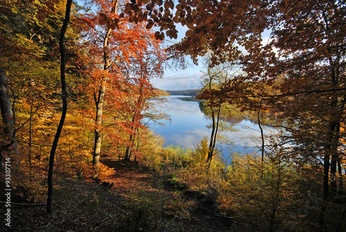 Złota polska jesień, lesisty brzeg jeziora Dębno - 93307714