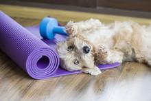 A Dog Resting On Yoga Mat