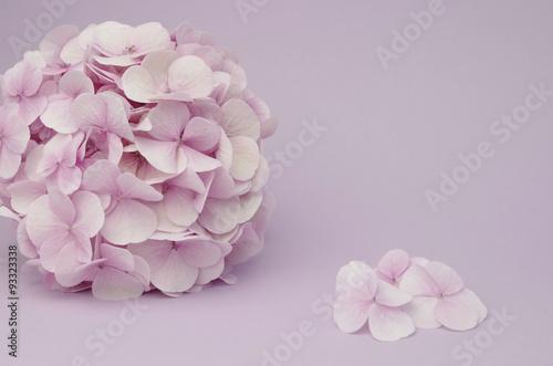 Papiers peints Hortensia einzelne rosa hortensie