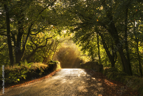 Photo Stands Road in forest Old stone bridge in woods at sunrise, cornwall, uk