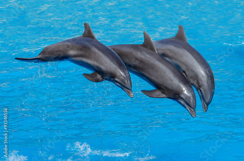 Foto op Plexiglas Dolfijnen Three dolphins during a jump ( flight),