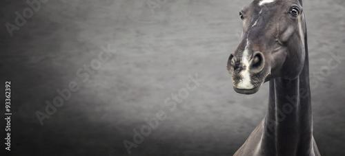 Foto op Canvas Paarden Close up of black horse portrait on dark textured background, banner