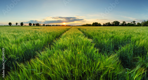 Canvas Prints Honey Sunset over wheat field with path