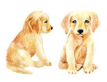 Labrador Retriever Puppy Set