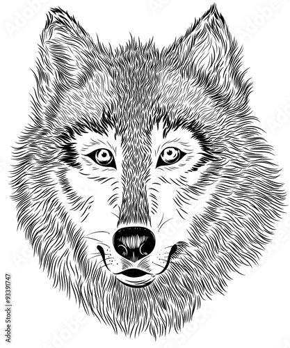 Photo sur Toile Croquis dessinés à la main des animaux black and white graphic wolf portrait
