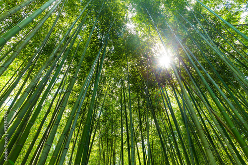 Foto op Canvas Bamboo High Bamboo forest