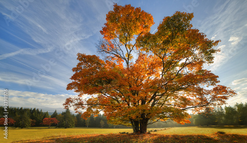 Foto op Canvas Herfst Big autumn oak and green grass on a meadow around