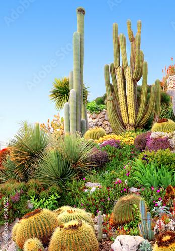 Jardin de plantes grasses en rocaille - Acheter cette photo libre de ...