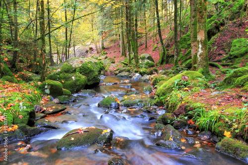 Láminas  Paysage automnal / paysage aux couleurs d'automne en forêt Vosgienne
