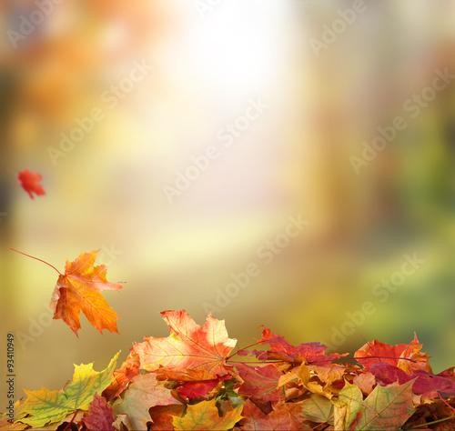 Aluminium Prints Autumn Falling Autumn Leaves background