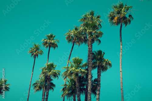 In de dag Los Angeles Palm trees against blue sky