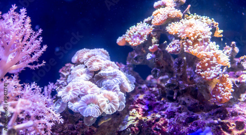Coral reef in aquarium #93412741