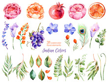 Colorful Floral Collection With Roses, Flowers, Leaves, Pomegranate, Grape, Callas, Orange, Peacock Feather, With 31 Colorful Floral Watercolor Elements.