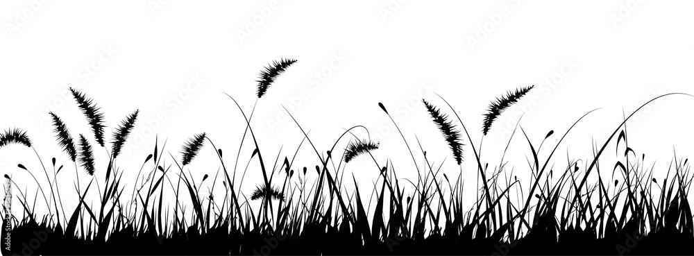 Fototapety, obrazy: vector grass