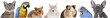 canvas print picture - Verschiedene Haustiere - aufgereiht Banner
