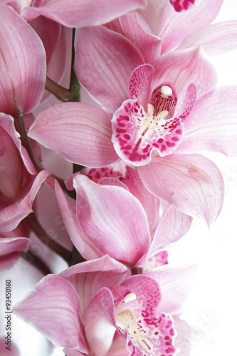 obraz lub plakat Tropical pink orchid isolated over white background