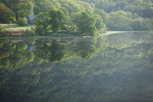 Reflection Of Trees In A Loch, Scotland