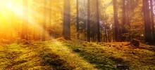 Morgen Im Herbstwald