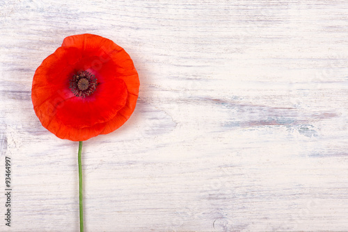 Poster Poppy poppy on old white wooden table closeup
