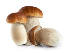 Boletus Edulis (king Bolete) Isolated On White Background.