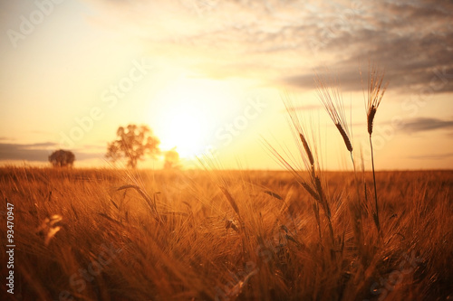 Deurstickers Cultuur Sunset in Europe in a wheat field