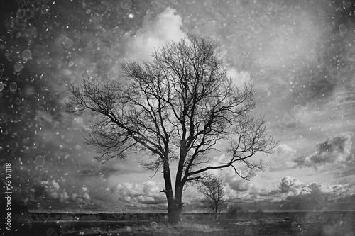 samotne-drzewo-bez-lisci-jesienia