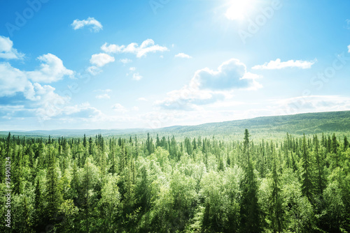 Poster de jardin Forets forest in sunny day