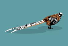 Royal Pheasant. Vector Illustr...