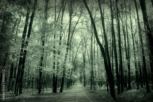 Fotobehang Olijf monochrome landscape nature park