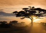 Fototapeta Sawanna - Sunset on the african savannah