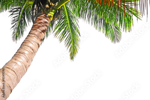 Montage in der Fensternische Palms Coconut palm tree