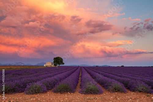 Lavender field on sunset, Provence, France Poster