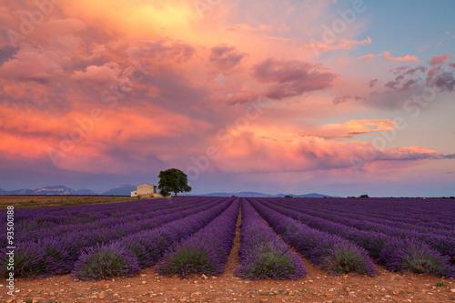 Photo  Lavender field on sunset, Provence, France