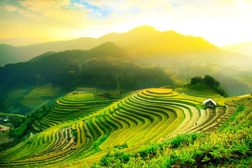 Fototapeta Do gastronomi Rice fields on terraced of Mu Cang Chai, YenBai, Vietnam. Rice fields prepare the harvest at Northwest Vietnam.Vietnam landscapes.
