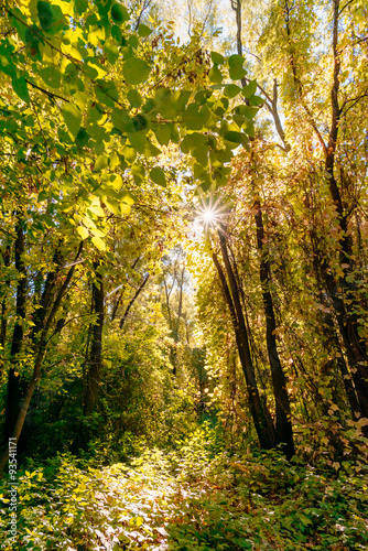 Foto op Aluminium Pistache Inextricable Autumn Forest With the Sun Passing Through the Tree Leaves