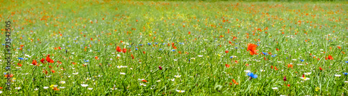 Colorful blooming wild flowers on the idyllic meadow at spring time in the sunshine #93542505