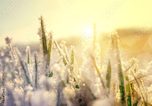 Foto-Leinwand ohne Rahmen - Frozen grass at sunrise close up. Nature background. (von vencav)