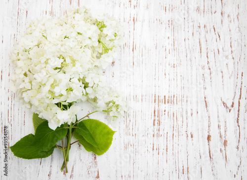 Foto auf Gartenposter Hortensie white hydrangea