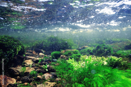Staande foto Koraalriffen underwater scenery, algae, clean clear water, mountain river cleanliness