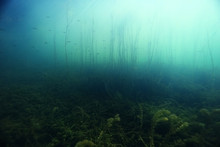 Underwater Scenery In The Rive...