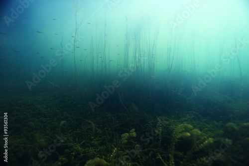 Photo underwater scenery in the river diving