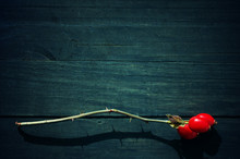 Rosehip On An Empty Wooden Surface. An Empty Wooden Background In Blue Tones With A Rosehip Branch