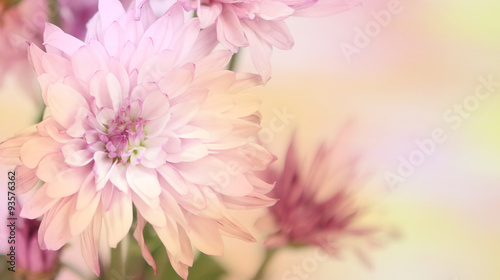 Colorful pink and yellow flowers with an area for text.  Horizontal.
