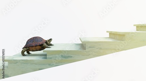 moving turtle wants to climb on the stairs concept background Canvas Print