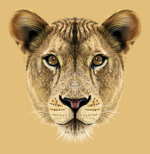 Lioness Animal Cute Face. Illu...