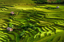 Scenic View Of Terraced Rice F...