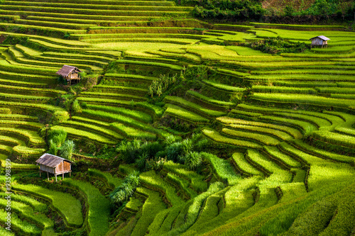 Fotobehang Rijstvelden Terraced rice fields, Yen Bai province, Vietnam