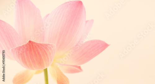 Acrylic Prints Lotus flower sweet pink lotus in soft and blur style for background